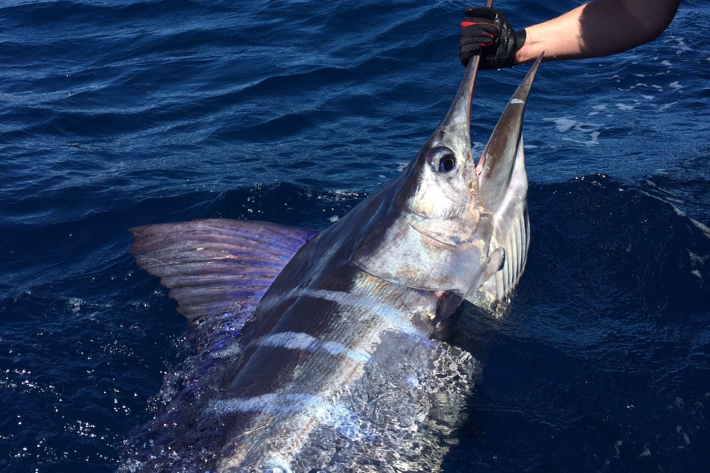 Marlin Crusher by YouFishTV