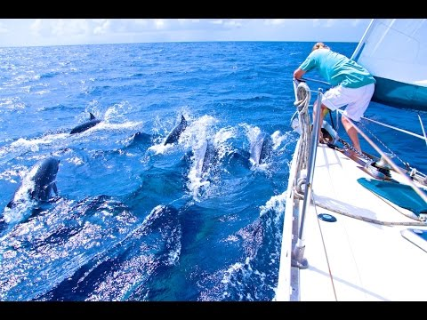 Sailing with Dolphins between Dominica and St Lucia!