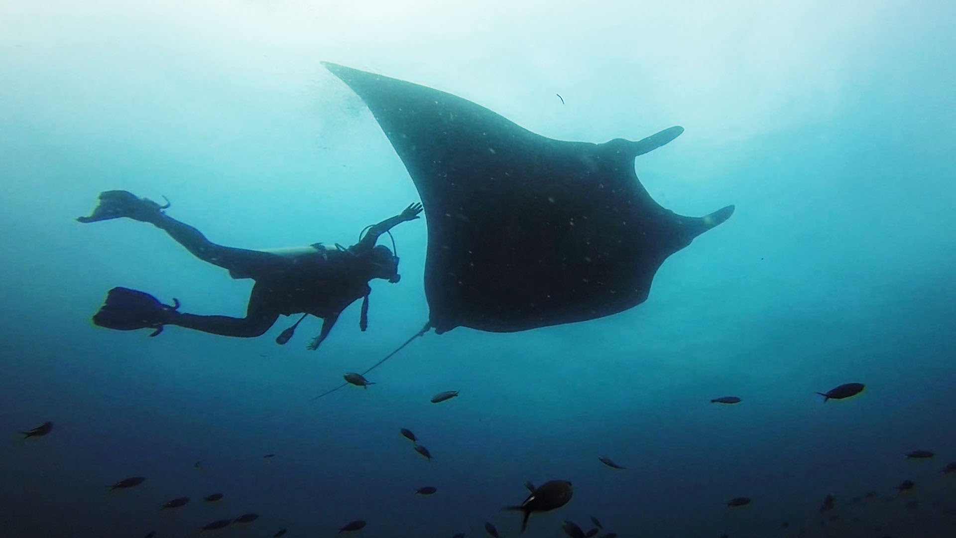 GoPro Diving with Giant Manta Rays in Ecuador
