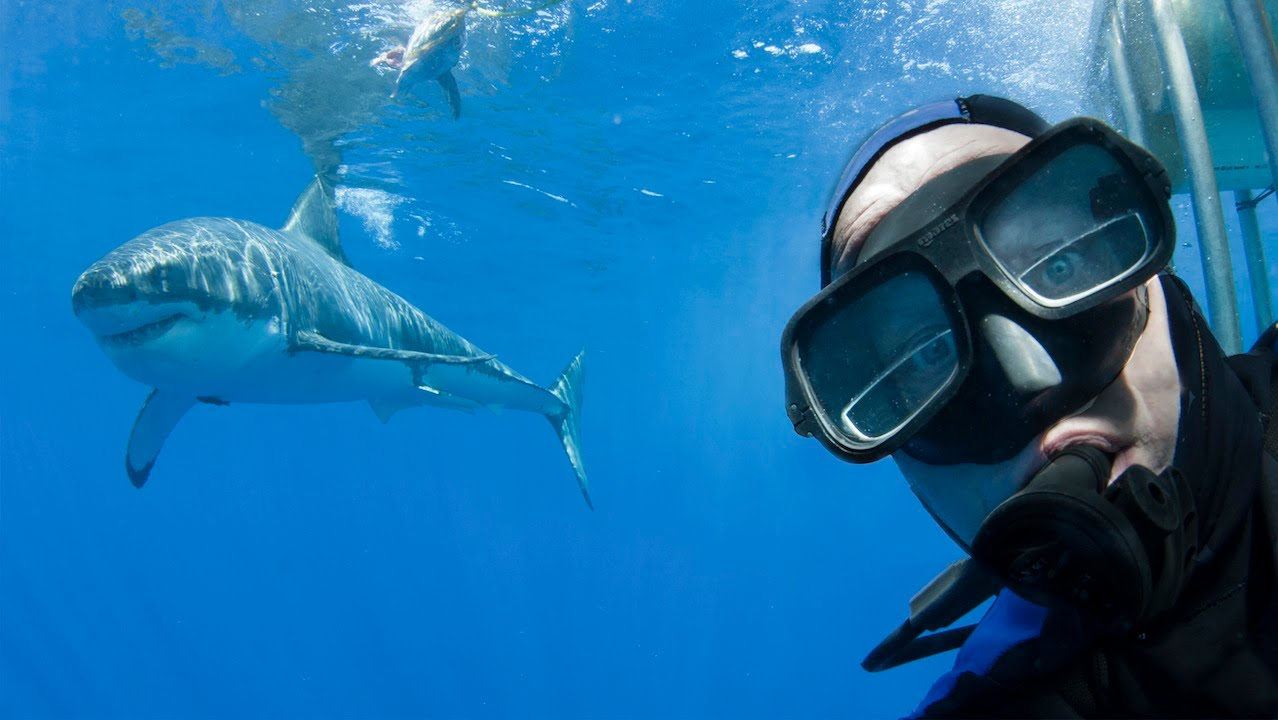 Diver Poses With Great White – Shark Selfie Style