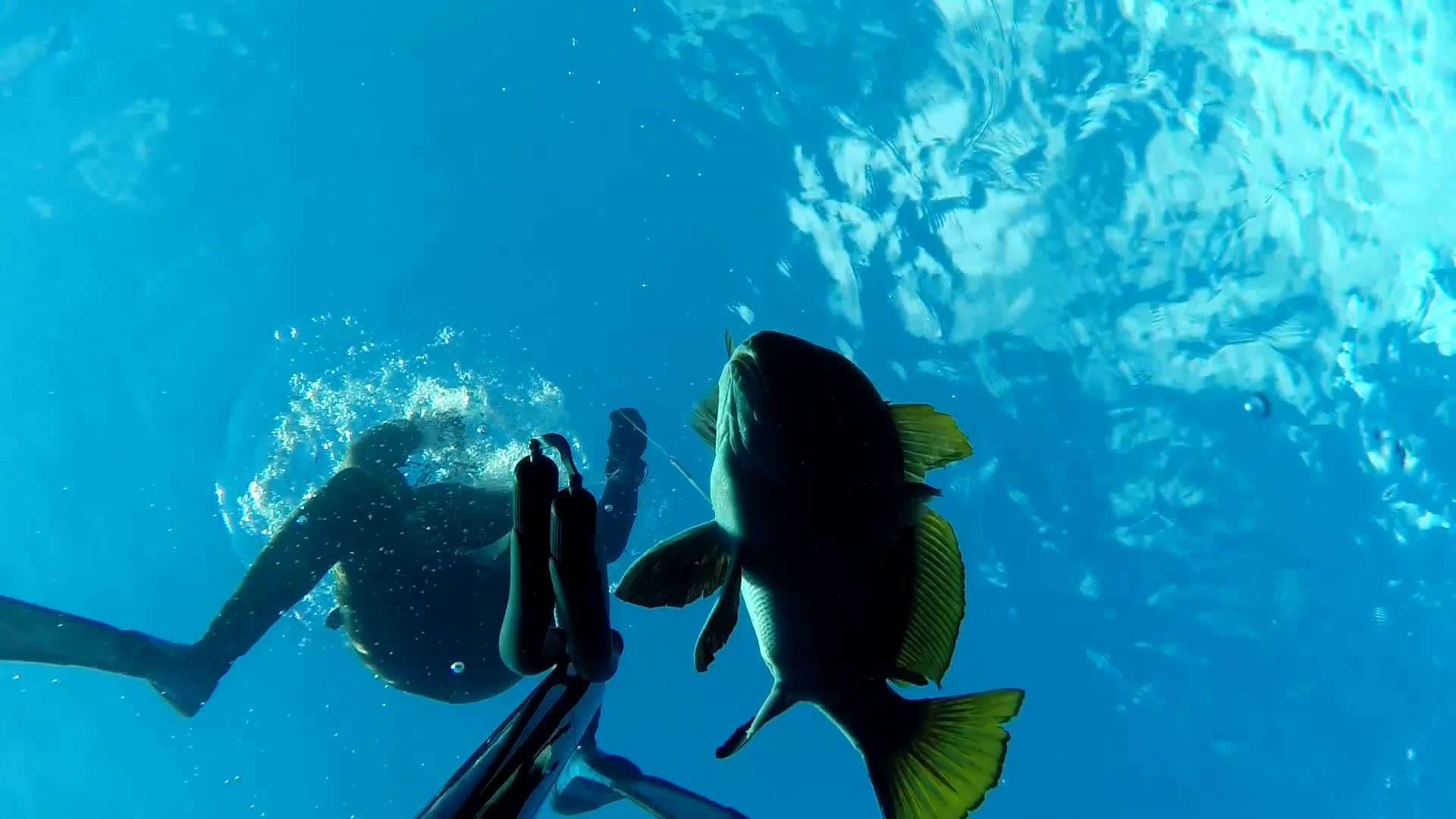 Spearfishing by Dimitris Vosios – Brown Meagre 1.6 kgr