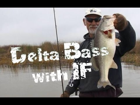Bass Fishing In The California Delta