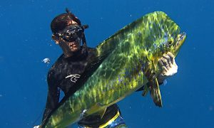 Fusion Spearfishing by Nicholas Kouvaras